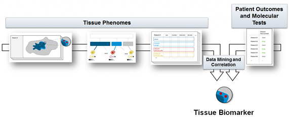 Tissue Phenomics Graphic